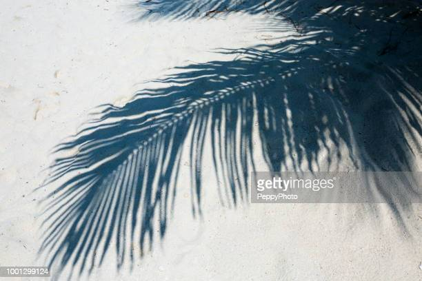 shadow of palm tree leaf in the sand, caribbean - schaduw stockfoto's en -beelden