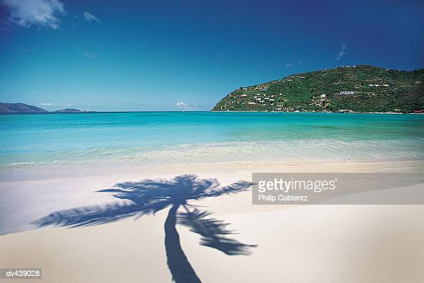 shadow of palm tree on tropical beach - cane garden bay stock pictures, royalty-free photos & images