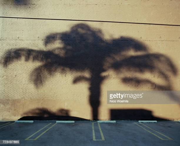Shadow of palm tree on wall in parking lot