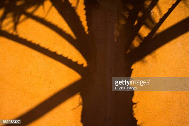 shadow of palm tree - hugh hastings stock pictures, royalty-free photos & images