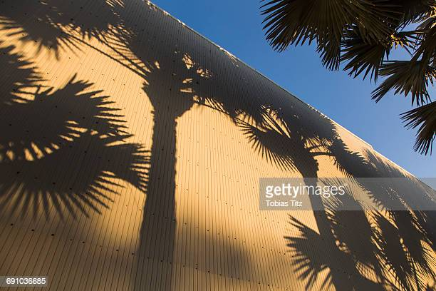 Shadow of palm trees on corrugated wall against sky