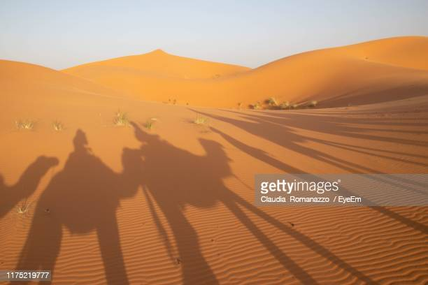shadow of people riding camels on sand at desert - claudia romanazzo foto e immagini stock