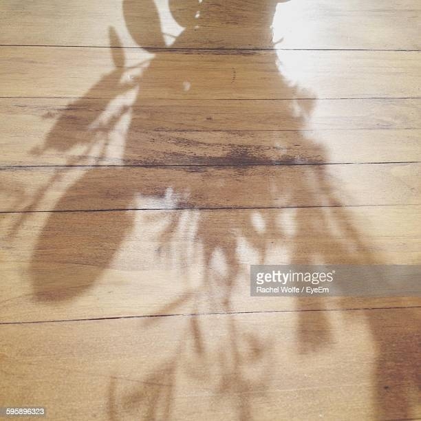 shadow of plant on hardwood floor - rachel wolfe stock pictures, royalty-free photos & images