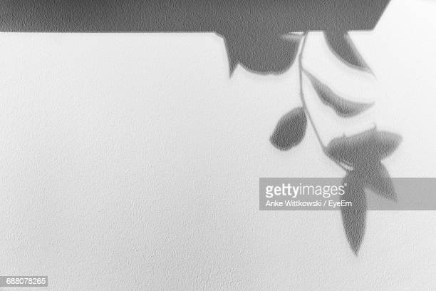 shadow of plant on wall - schaduw stockfoto's en -beelden