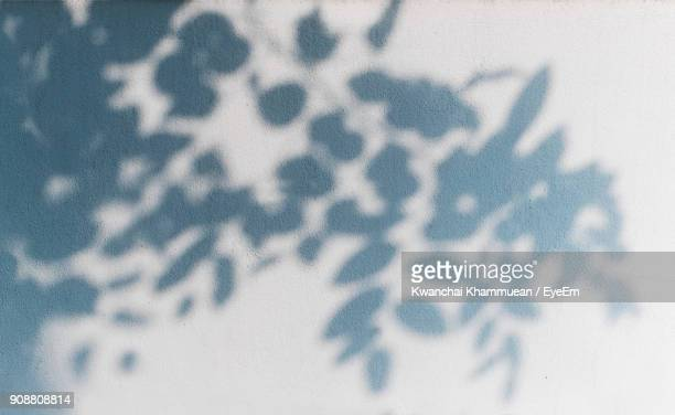 shadow of tree on wall - shadow stock pictures, royalty-free photos & images
