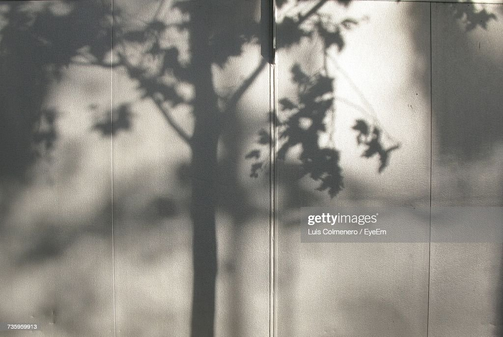 Shadow Of Tree On White Wall : Stock Photo