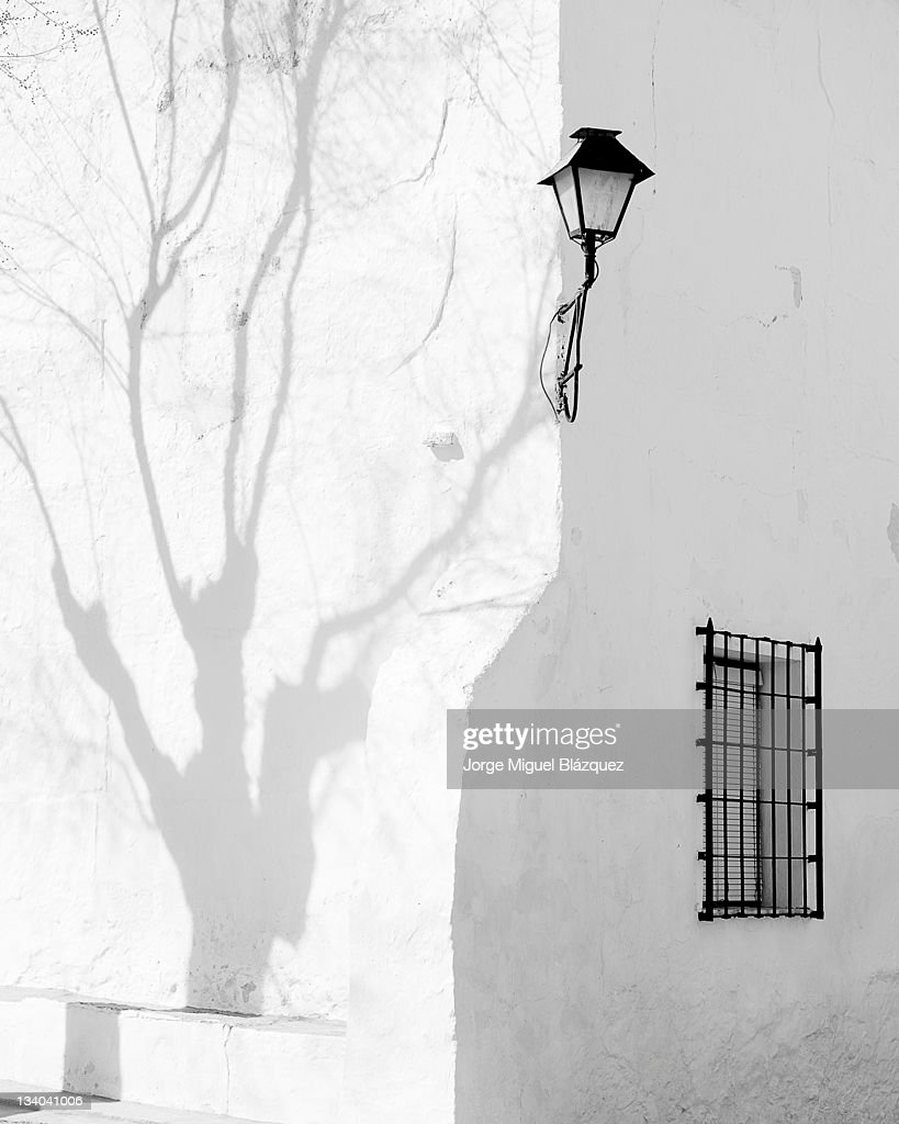 Shadow of tree : Foto de stock