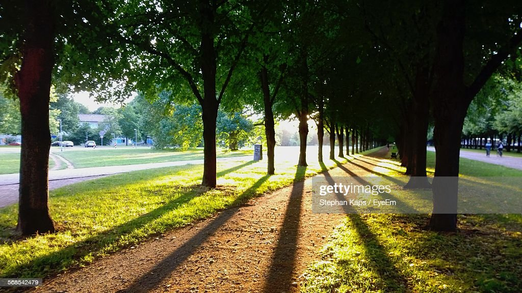 Shadow Of Trees Falling On Footpath In Park : Stock Photo