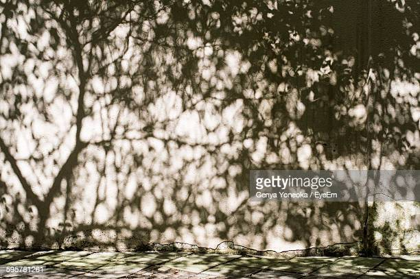 Shadow Of Trees On Wall