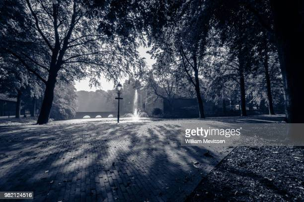 shadow of trees - william mevissen stock pictures, royalty-free photos & images