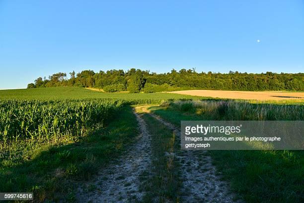 shadow on dirt road between cultivated land - vegetais - fotografias e filmes do acervo