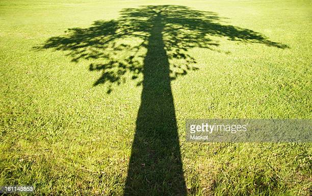Shadow over grass field