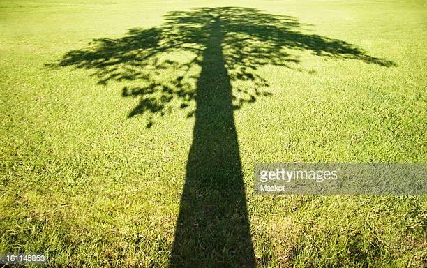 shadow over grass field - 安定 ストックフォトと画像