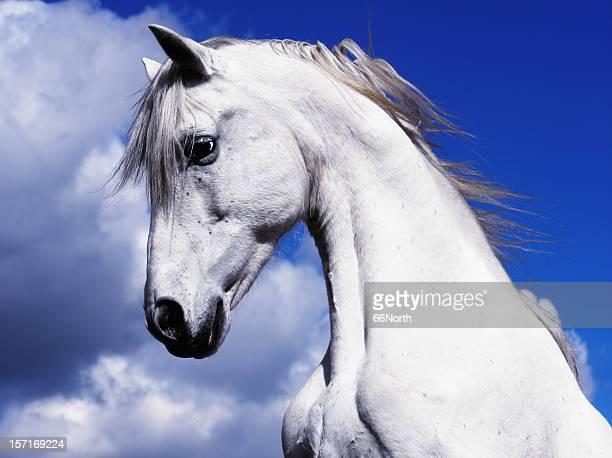 shadowfax blanco caballo en el cielo azul nubes - caballo blanco fotografías e imágenes de stock