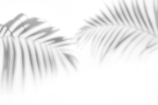 Shadows from palm trees on a white wall 1160388753