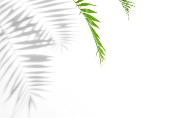 Free palm shadow Images, Pictures, and Royalty-Free Stock