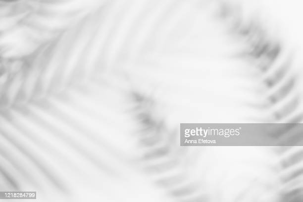 shadows from tropical leaves - schaduw stockfoto's en -beelden