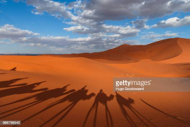 Shadows of camels walking in line through the Erg Chebbi desert in Morocco