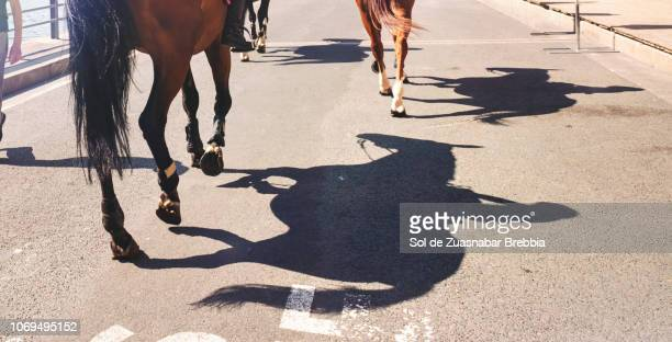 shadows of horses and riders on the floor
