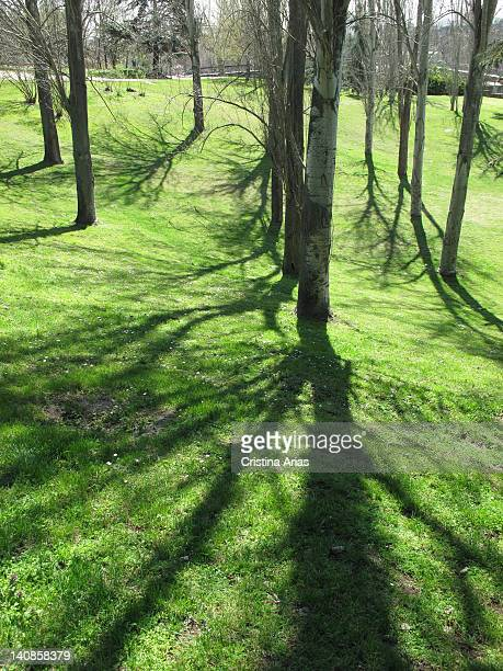 Shadows of poplars in the Parque del Oeste in Madrid, this is one of the largest parks in Madrid, began in the late nineteenth century and is located...