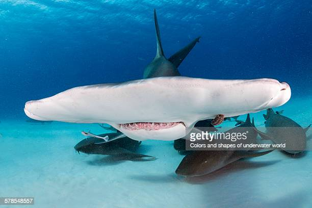 shadows of the sea - south bimini stock photos and pictures