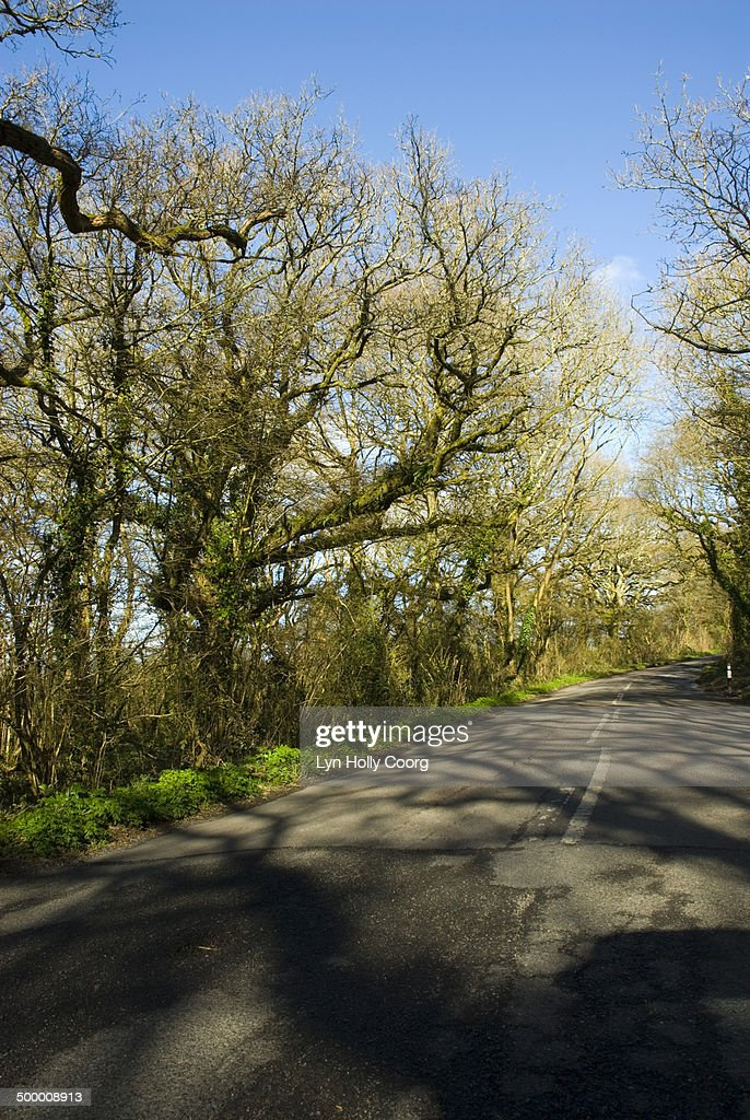 Shadows of tree branches on road : Stock Photo