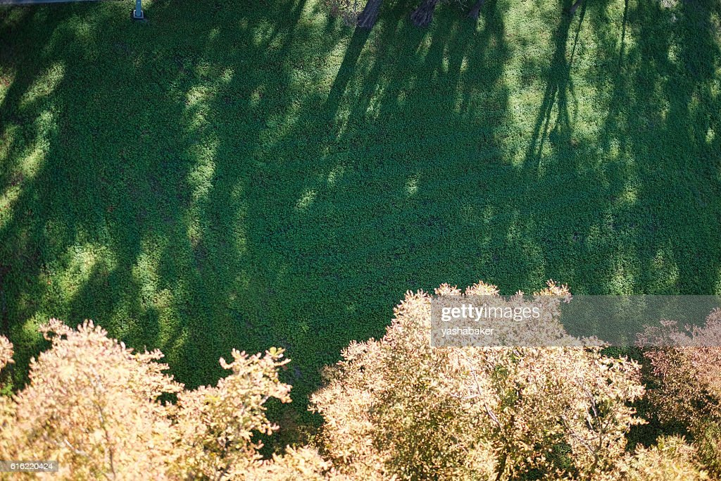 Shadows of trees lie on the lawn : Stock Photo