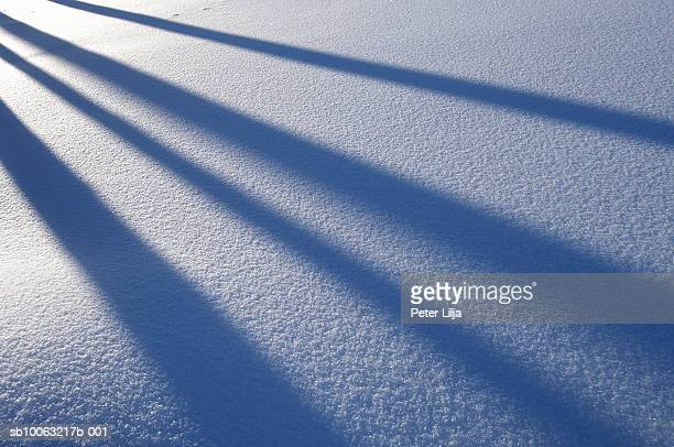 shadows of trees on snow, winter, medle, vasterbotten, sweden - peter snow stock pictures, royalty-free photos & images