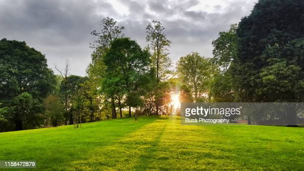 shadows of trees projecting on green lawn against sunset - parco pubblico foto e immagini stock