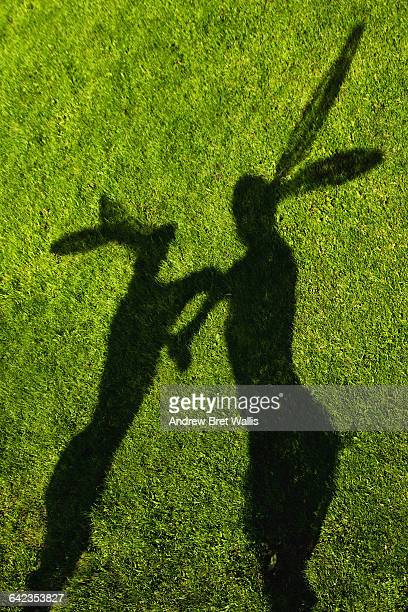 Shadows of two boxing hares against grass