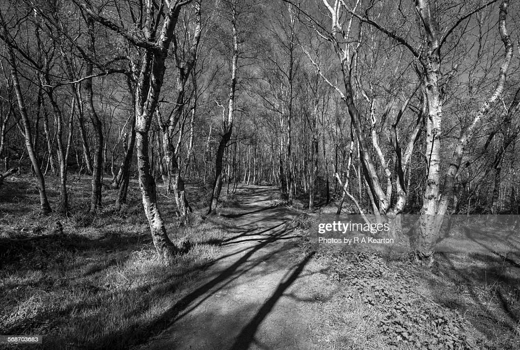 Shadows on the path in the woods : Stock Photo