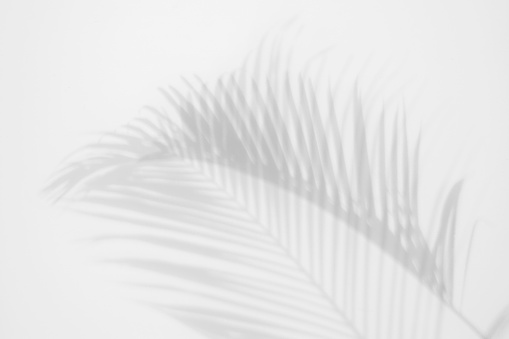 shadows palm leaves on a white wall. abstract background 1043930244
