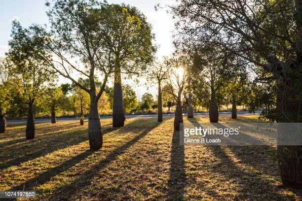 shadows - lianne loach stock pictures, royalty-free photos & images