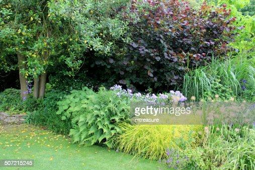 schattigen garten grenze mit farnen wind meetingraum campanula lila haselnuss lawn stock foto. Black Bedroom Furniture Sets. Home Design Ideas