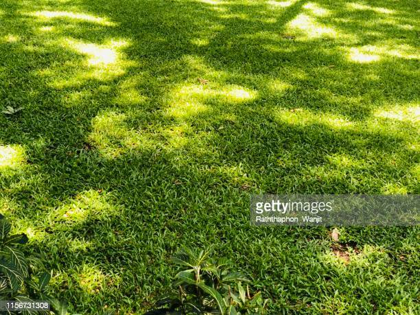 shady lawn background at home garden . - shade stock pictures, royalty-free photos & images