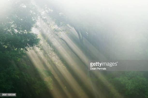 Shafts of Lightvin Foggy Forest