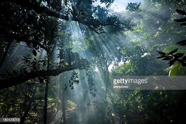 shafts of sunlight in the jungle