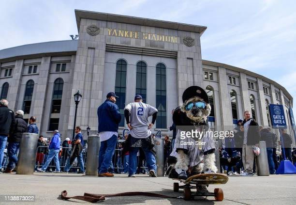 Shaggy the dog attends Opening Day at Yankee Stadium for the game between the Baltimore Orioles and the New York Yankees on March 28 2019 in the...