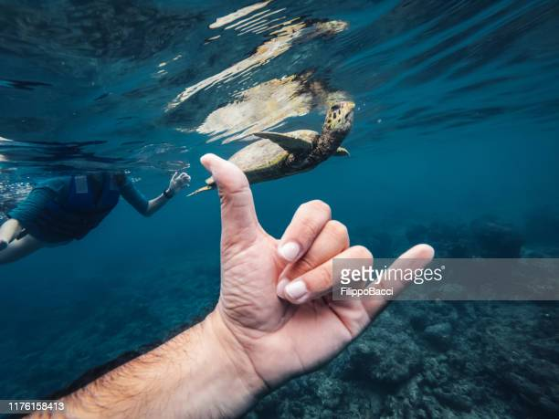 shaka sign with a sea turtle in a paradisiac sea at maldives - hand sign stock pictures, royalty-free photos & images