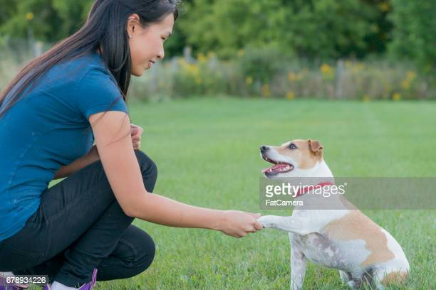 shake a paw - training grounds imagens e fotografias de stock