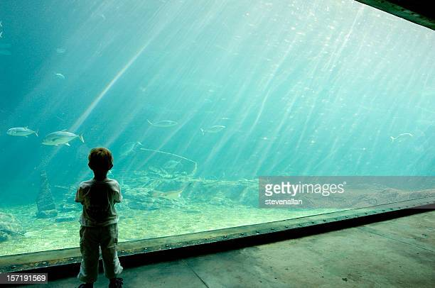Shaker Aquarium Durban South Africa