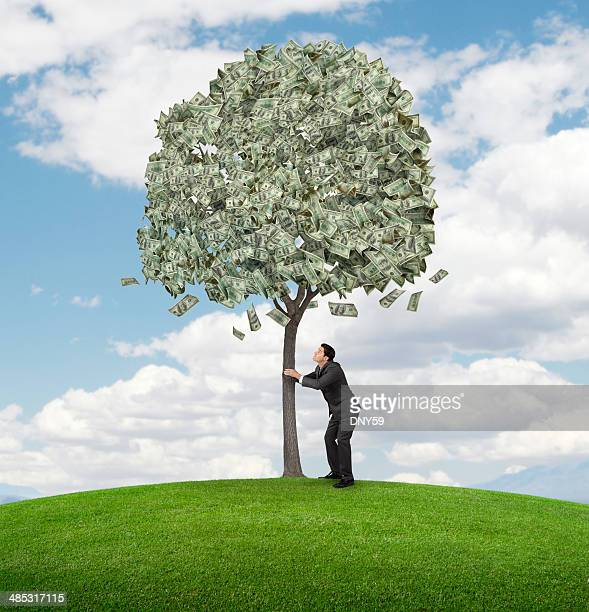 shaking money tree - money tree stock photos and pictures
