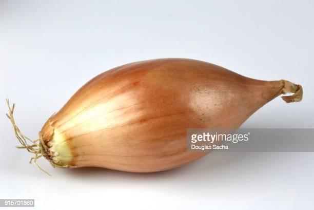 shallot onion (allium cepa) - echalote fotografías e imágenes de stock