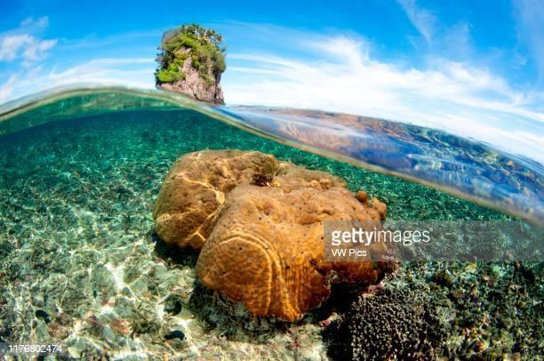 Shallow coral head at Fatu or Flower Pot Rock Pago Pago Tutuila Island American Samoa