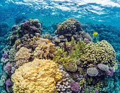 https://www.istockphoto.com/photo/shallow-coral-reef-gm997861878-269961427