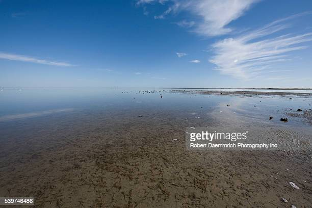 Shallow flats of the Laguna Madre bake in the winter Texas sun during low tide The area averages only a foot or two in depth but is known for...