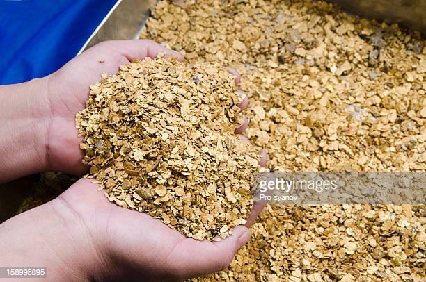Shallow nuggets  natural Siberian gold.