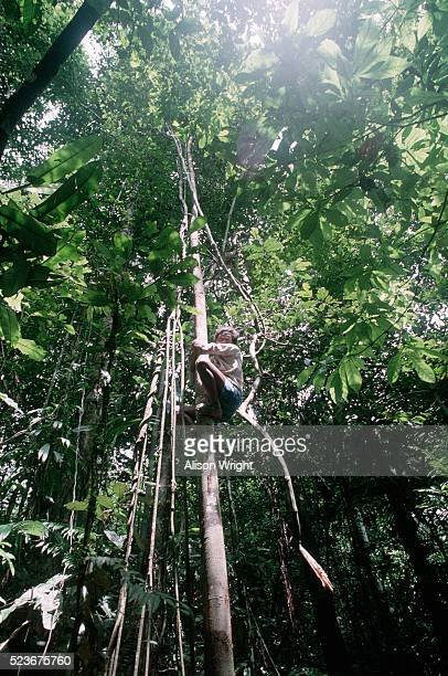 Shaman Climbing a Rainforest Vine
