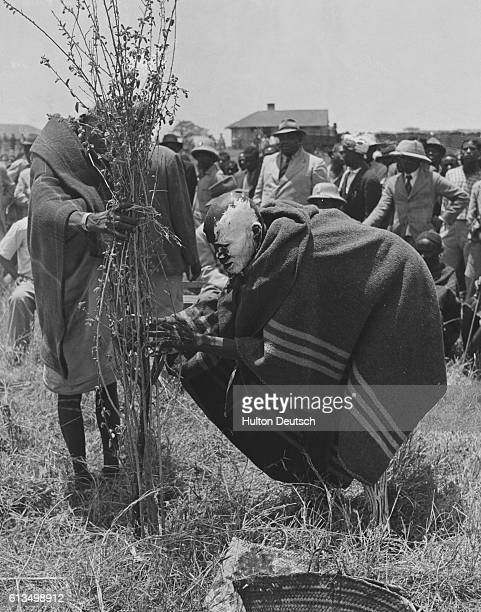 Shaman removes holds the branches of the mugare bush in preparation for a curse against the Mau Mau warriors. Performing on behalf of the Kenyan...