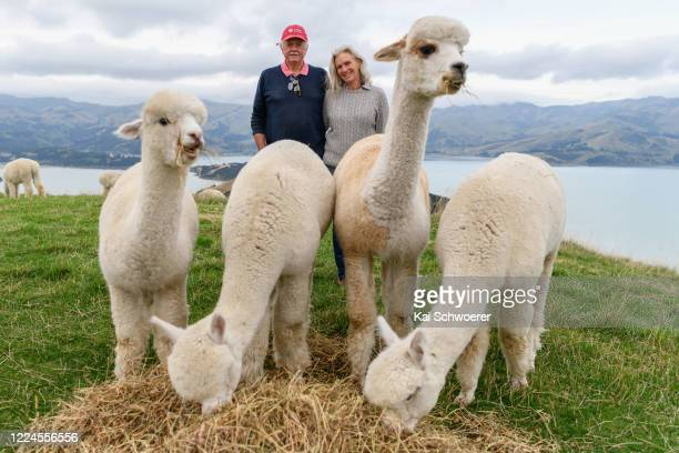Shamarra Alpaca owners Frank and Anya Walkington pose with their alpacas on May 13 2020 in Akaroa New Zealand Their farm tours will recommence on May...